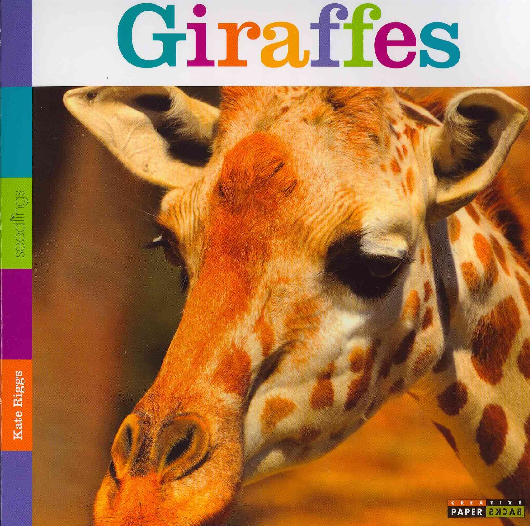 Giraffes By Riggs, Kate